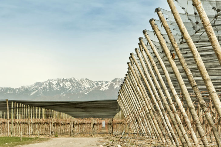 Nets covering the vines in Argentinian vienyard at the bottom of Andes